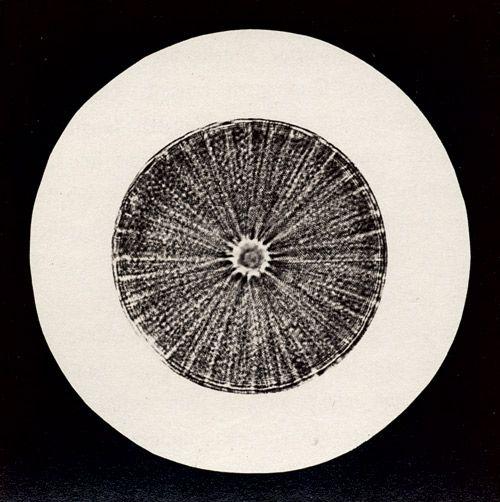 """Julius Stinde's """"Blicke durch das Mikroskop"""" 1870"""