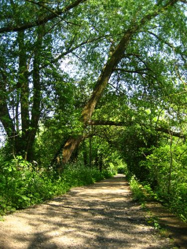The walk to Queen Charlotte's Cottage, Kew Gardens