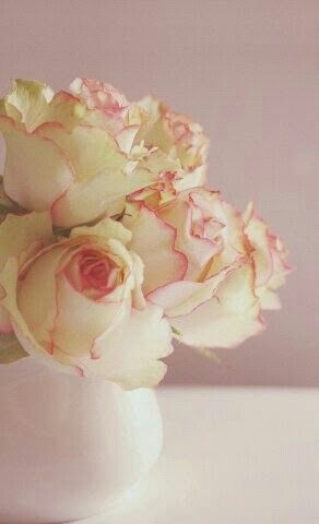 Rose blanches