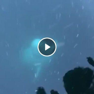 Golfinho devolve celular que caiu no fundo do mar