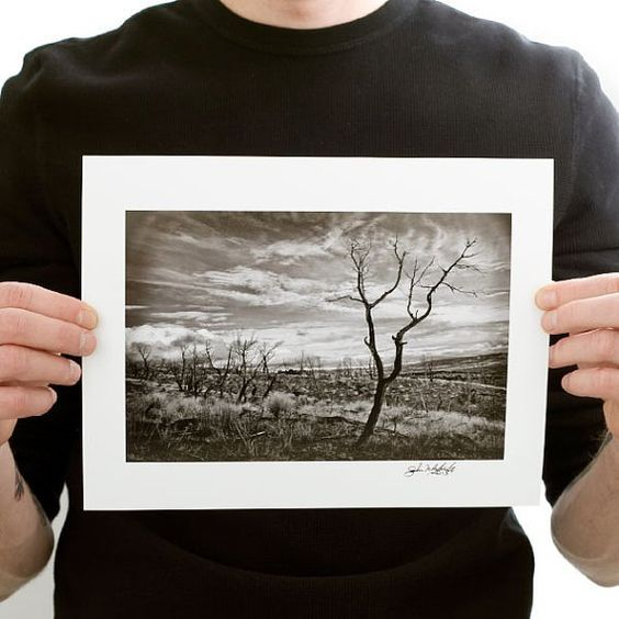 Burnt Tree (Black and White Photograph)