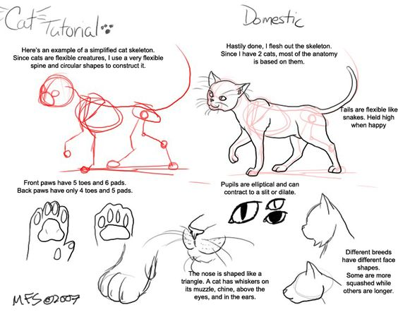 Cat Tutorial: Domestic by modesty.deviantart.com on @deviantART