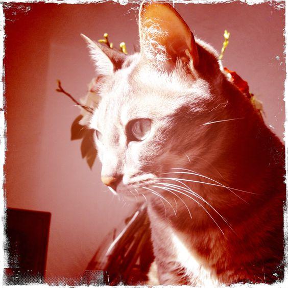 FANFAN KIT CAT