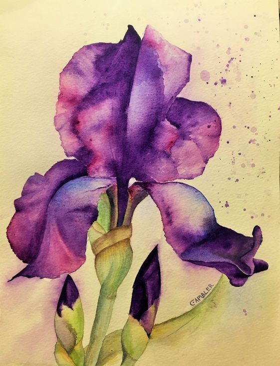 Iris In 2020 Iris Painting Iris Drawing Floral Watercolor
