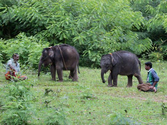 kerala muthanga wildlife sanctuary elephants