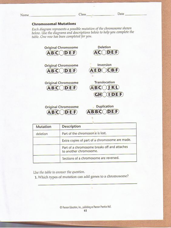 Printables Mutations Worksheet worksheets on pinterest chromosomal mutations worksheet