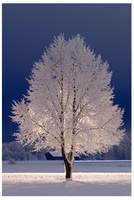 Winter Bliss of White on White....Beautiful...: