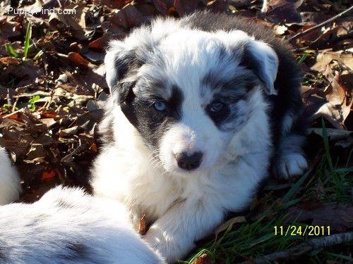 Pj As A Puppy Puppies Cute Animals Animals