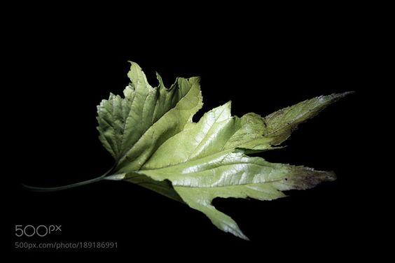 otoño hojas muertas by alfonsocanomiguel