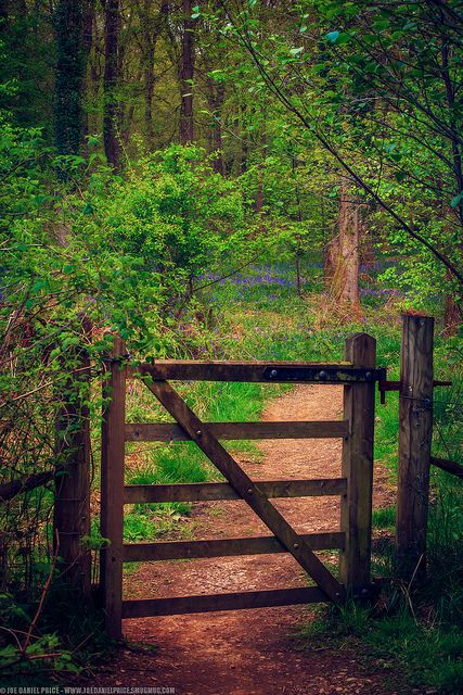 Gate at the Forest of Dean, Gloucestershire, England • by Joe Daniel Price…