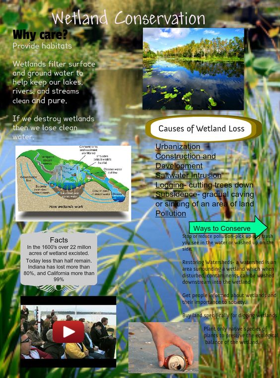 Wetland Conservation Science Earth's Water Pinterest