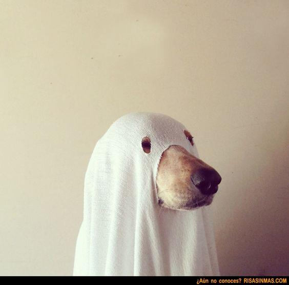 Disfraz Halloween para perros: