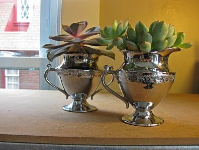 creamer and sugar used to plant succulents.