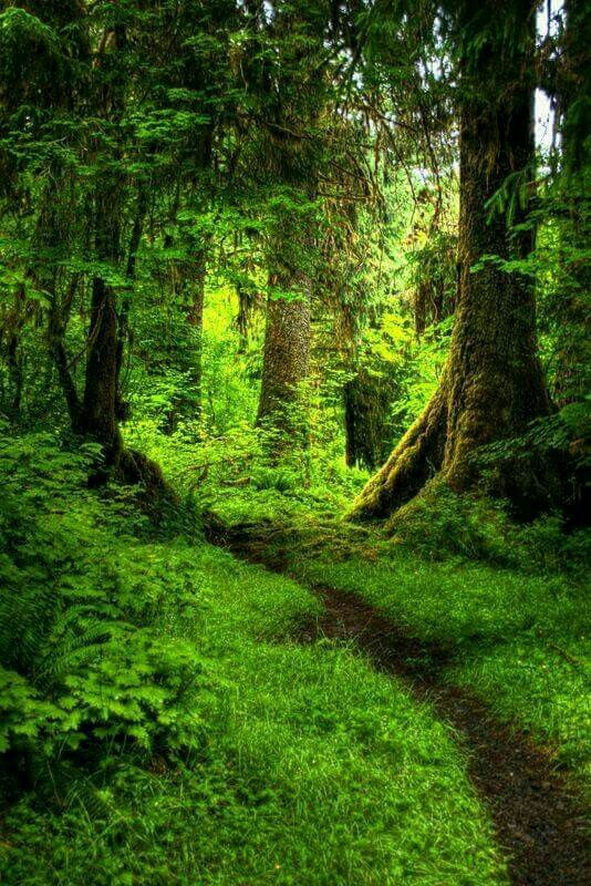 A Vision Becomes More Forest Path Landscape Nature