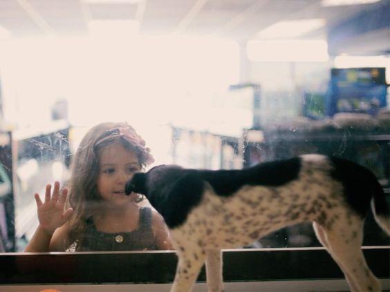 """Histórias deanimais resgatados e adotados são sempre emocionantes, vemos como eles são capazes de mudar a vida da pessoa que o adotou, veja algumas dessashistórias aqui. No Brasil,existem quase 20 milhões de animais em abandono, segundo dados da Organização Mundial da Saúde), todos esperando para serem adotados e dar muito carinho para seus futuros donos.Mas,...<br /><a class=""""more-link""""…"""