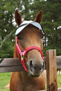 Horse Sun Visor!  Shade the eyes with 90% UV protection