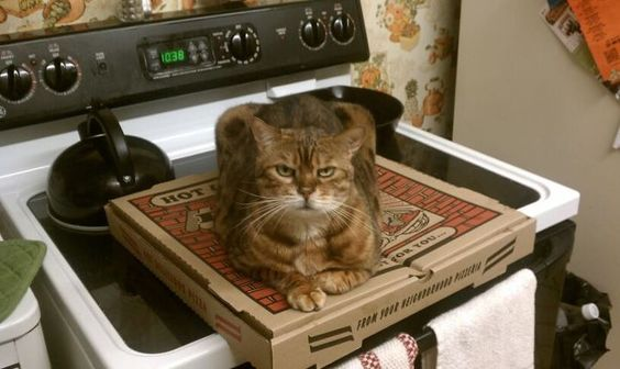 Nobody ate the pizza