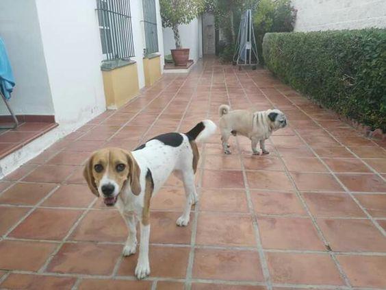 Ratos en casa 08/16 Lili, Charlie