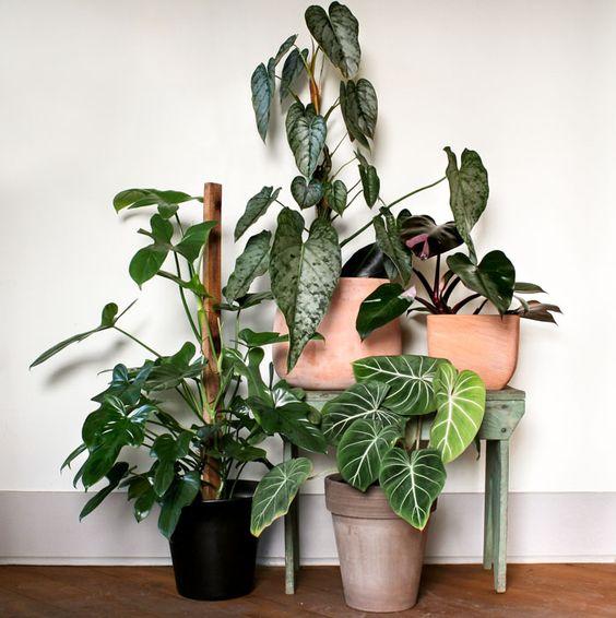 domowe rośliny