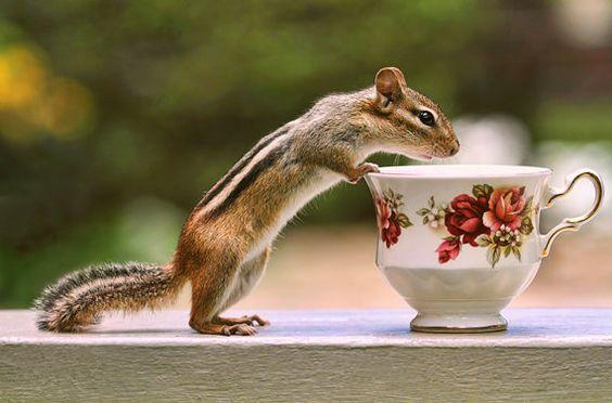 Chipmunk Photograph, Cute Animals, Chipmunk Print, Wildlife Prints, Tea Art, Tea Cup Print, Bone China Teacup, English Tea, Animal Photo