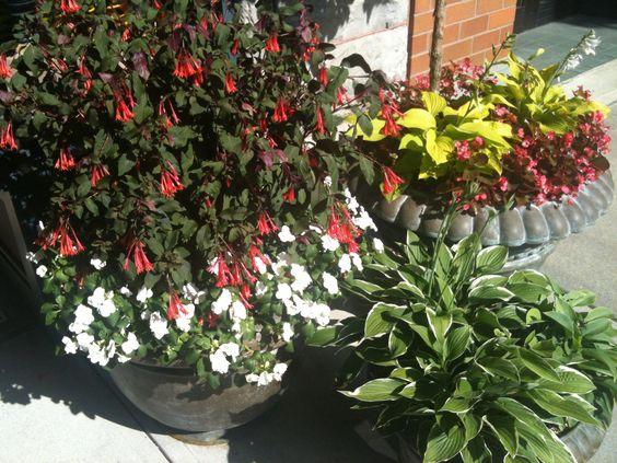 Planters in Saratoga