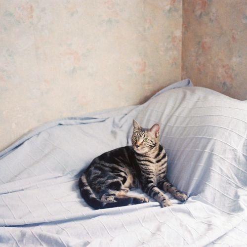 das coisas simples (gato no sofá)
