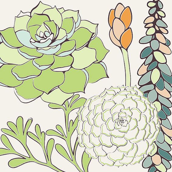 Succulent Flower Illustrations Clip Art Hens & by FishScraps