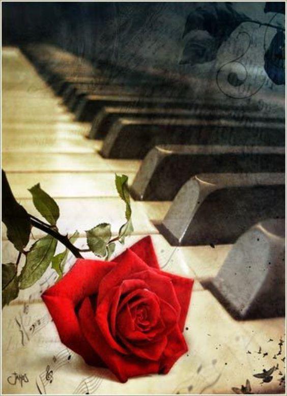 Rose -: