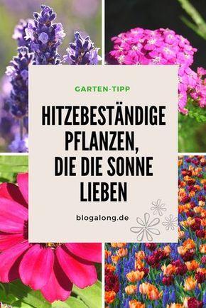 Hitzebestandige Pflanzen Die Die Sonne Lieben Blogalong De Garten Bepflanzen Pflanzen Blumen Fur Garten