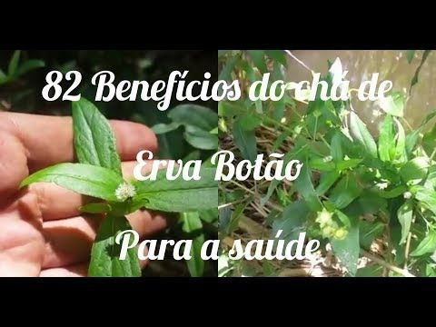 82 Beneficios Do Cha De Erva Botao Para A Saude Youtube Ervas