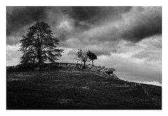 Tree Crag