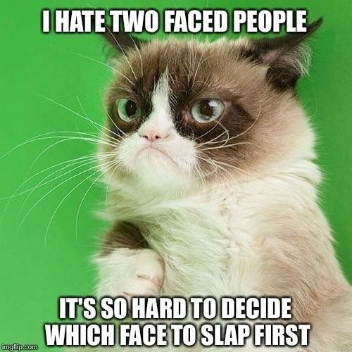 Oh grumpy cat #persiancatfacts
