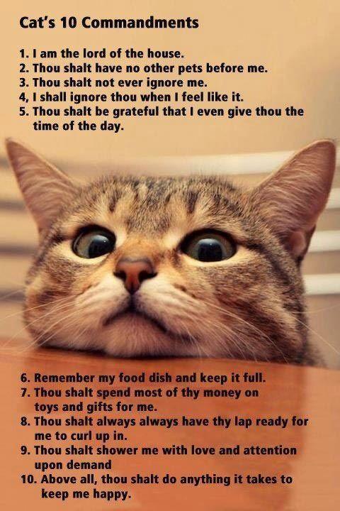 A cat's 10 commandments.: