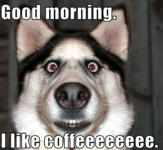 Good Morning Meme Dog : Good morning memes http quotesmeme meme