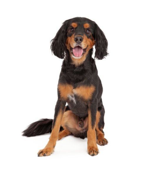 Medium Sized Dogs For Sale Not Too Large And Not Too Tiny Are The Popular And Well Loved Medium Dog Breeds Weighing Dog Breeds Medium Medium Dogs Dog Breeds