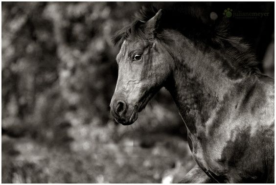 'What are you looking at' - Suspicious Pony on the Farm