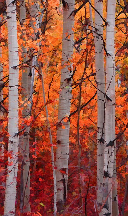 Autumn Splendor Photograph by Don Schwartz - Autumn Splendor Fine Art Prints and Posters for Sale: