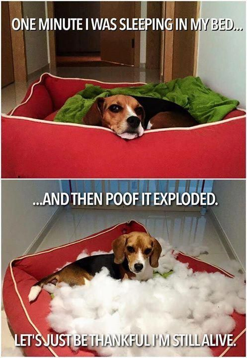 More About The Merry Beagle Puppies And Kids Beaglebaby