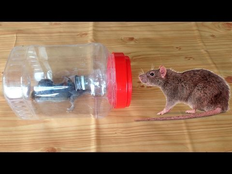 Plastic Bottle Mouse Trap In My Village How To Catch Rat By Trap In Cambodia Youtube Trucs Et Astuces Astuces