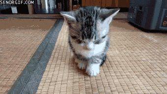 起きて、オイ!