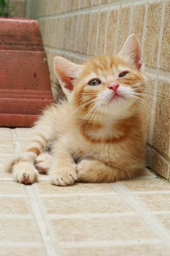 Pin By Jamie Su On Cute Animals In 2020 Cute Cats Kittens Cute Cats And Kittens