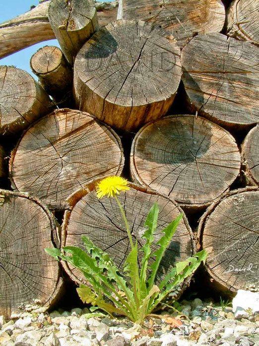 Totholz Holzstapel Holzstoss Holzstoss Naturgarten Wildlife Garden Wood Pile Log Pile Kunst Holzstapel Garten Und Naturgarten
