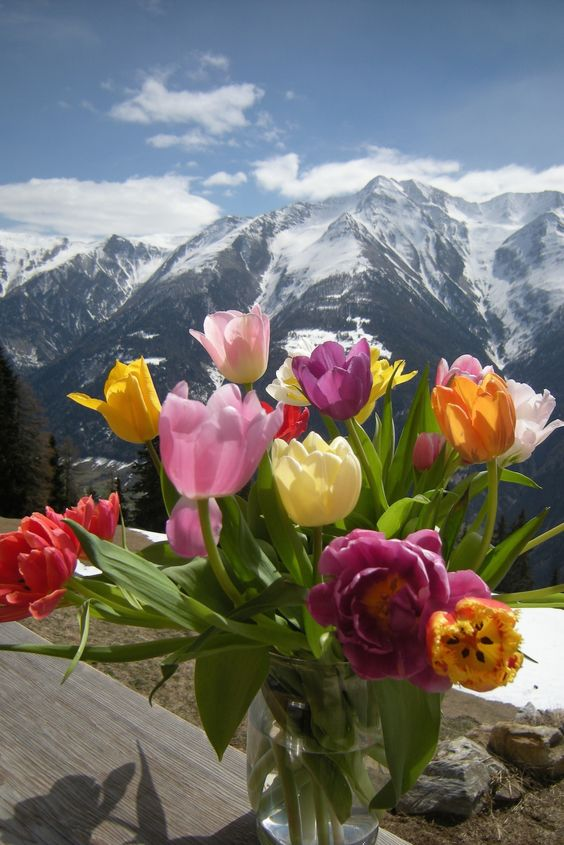 """22. 4. Na also, die Sonne lässt sich wieder blicken und im C**p gab es diesen Tulpenstrauss.  (Die erste eigene Pflanzung hatte den 2. Winter nicht überlebt. Sieht jedenfalls so aus.) Ach ja, heute soll es eine Rezension von """"Wanderful"""" in der Süddeutschen geben."""