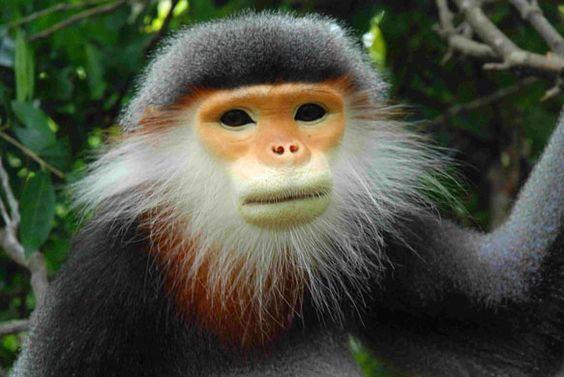Endangered primate species?
