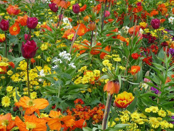A l'inverse d'hier, aujourd'hui je vous invite à admirer ce fouillis très organisé de fleurs aux couleurs chatoyantes... J'ai de la gratitude pour la nature, pour ce qu'elle nous offre et aussi pour ceux qui ont pensé, planté et entretiennent ce bouquet de printemps.