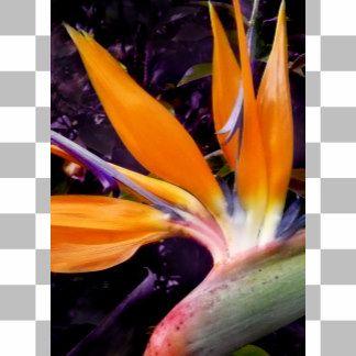 Bird-of-Paradise-cropped.jpg