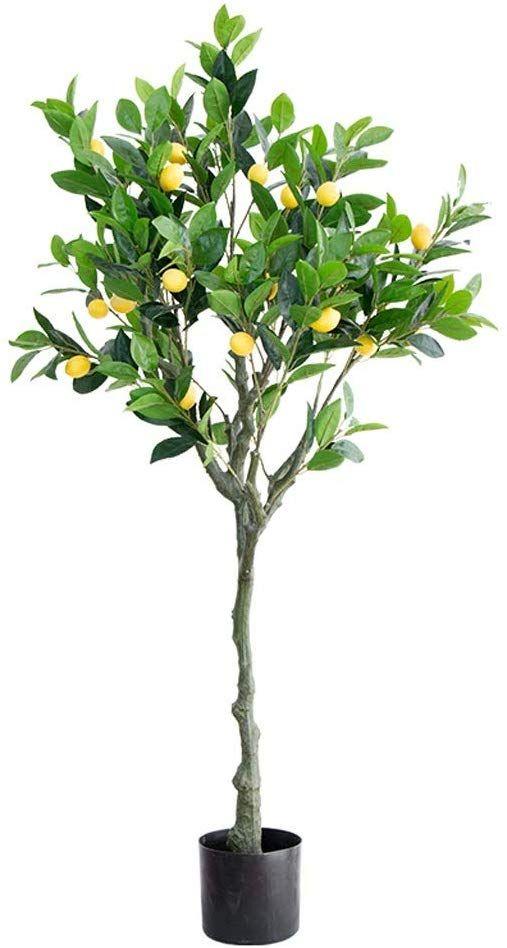 pot mandarine în varicoză tratamentul cu varicoză poltava