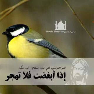 6c682345332fda7330297cd8cf041187 صور حكم واقوال الامام علي(ع)   حكم مصوره للامام علي (ع)   من اروع اقوال الإمام علي ع