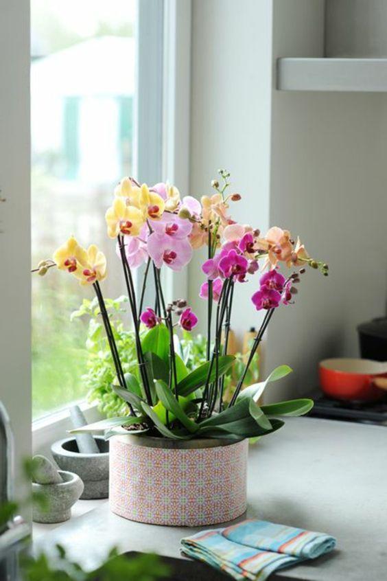 les fleurs d int rieur les orchid es en 40 images comment et d coration. Black Bedroom Furniture Sets. Home Design Ideas