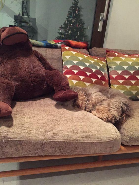 Chara かわいい ゴリラに足踏まれて寝てる  犬用の防災地震グッズを検索なう
